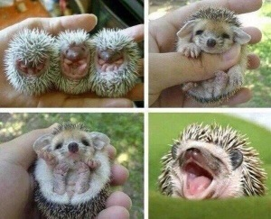 Prickly Babies